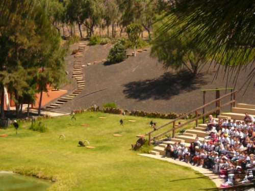 Rancho Texas Park, Isla de Lanzarote. Exhibición de cetreria